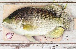 Como escolher, manipular e armazenar peixes