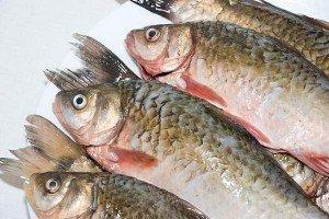Dicas de como escolher e limpar peixe