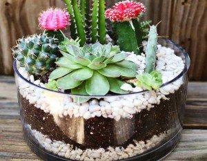 Como fazer um mini jardim de cactos