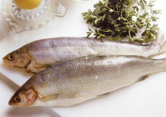 Congelamento e descongelamento de peixes e frutos do mar